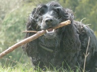 Wilson's definition of Happiness, a stick :)