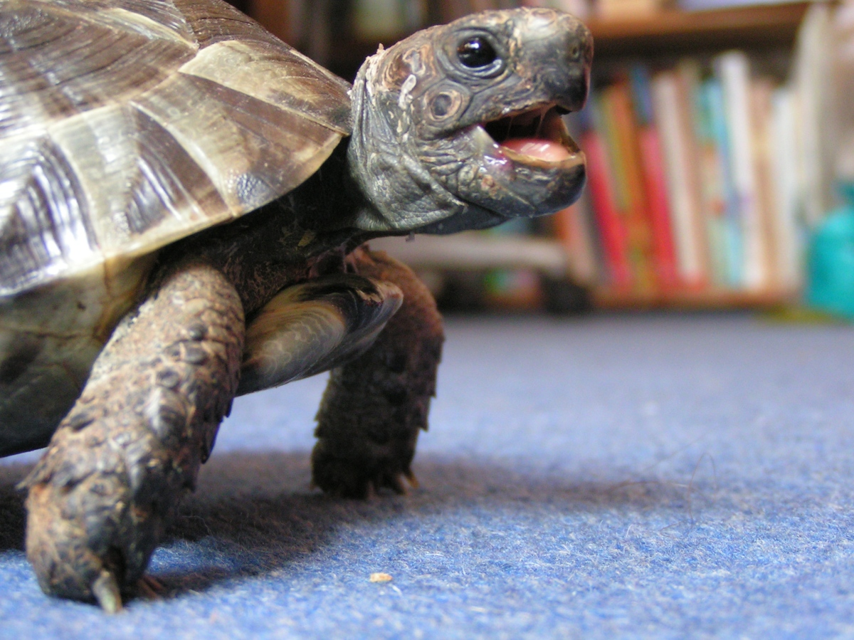 I don't want to hibernate said the little tortoise