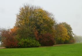 Surprisingly Green Autumnal Colours