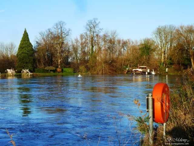 River Thames in flood by Desborough Island