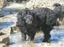Wilson loves water.... what's a little mud between friends?