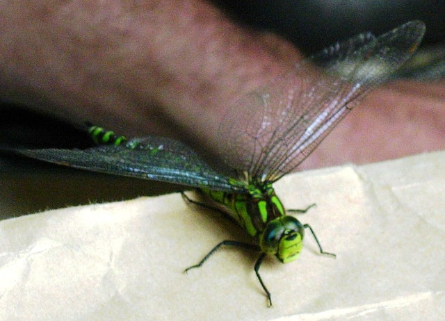 After second rescue, making sure Dragon-fly was ok!