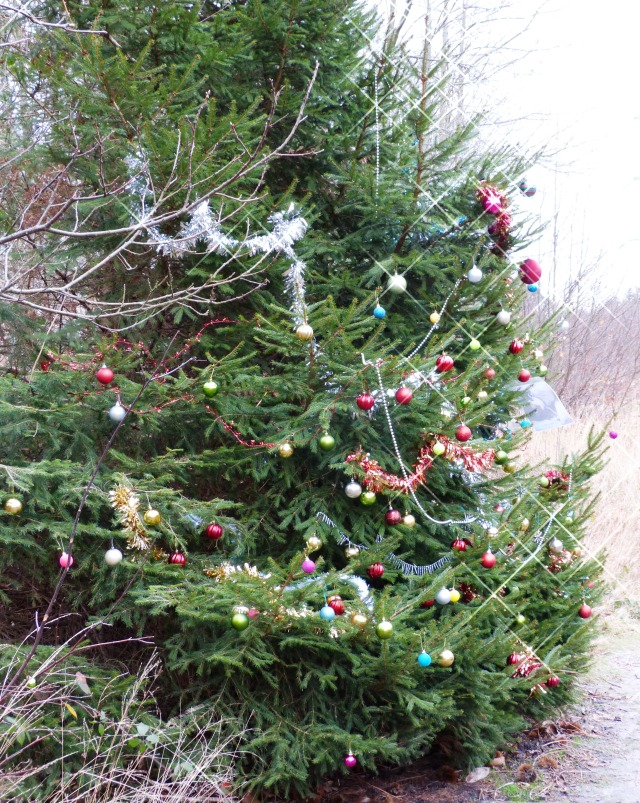 Tree covered in Christmas Decorations in Esher Woods