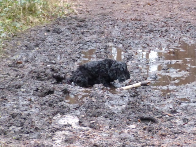 A very very muddy puddle