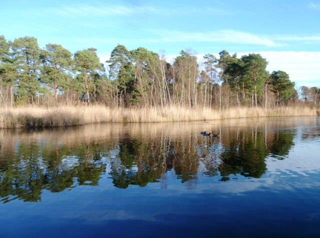 Black Pond, Esher Common, December 2012