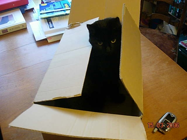 When I was studying quantum mechanics, Lilly was helping me with Schroedingers 'Cat in a Box' theory