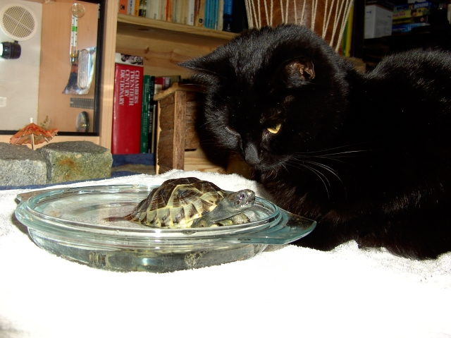 Lilly deciding whether tortoises are edible