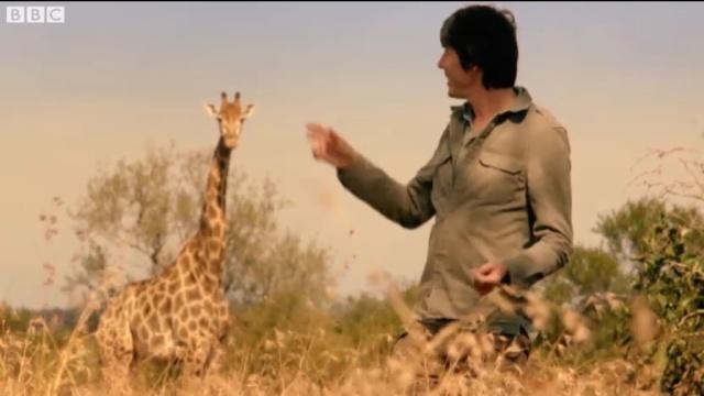Professor Brian Cox & a Giraffe