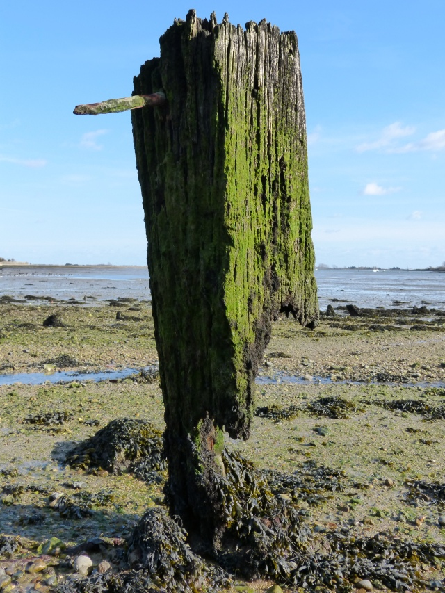 Part of old moorings in Chichester Harbour