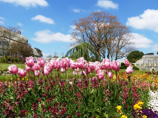 The Botanical Gardens Dublin