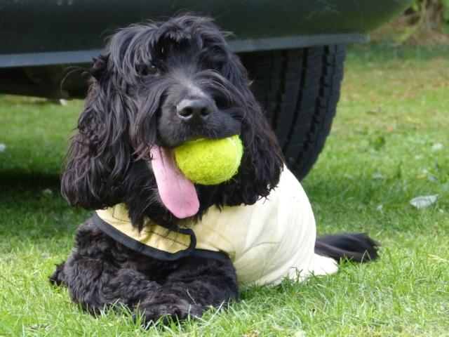 Ball anyone?