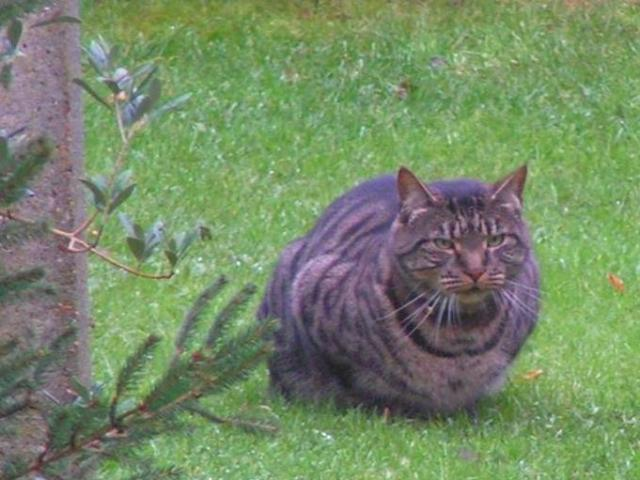 Our large cat, who admittedly did make quite a noise coming through the cat flap...
