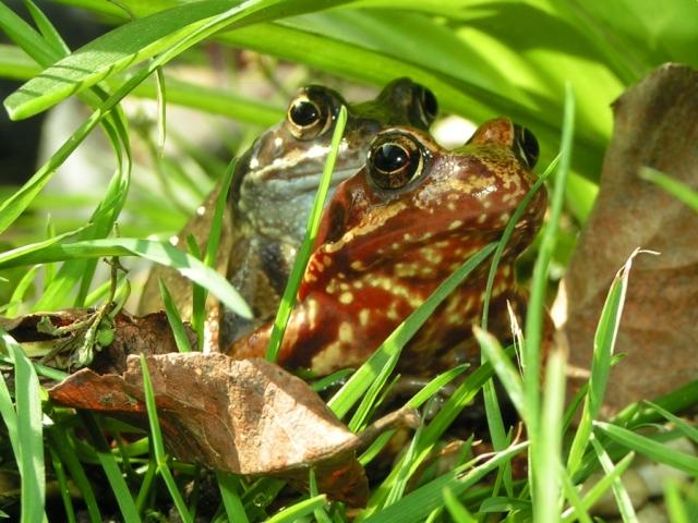 Frog hugs