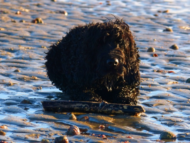Wilson waiting patiently with his stick while I photograph the starfish