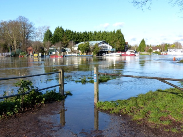 The Towpath flooding at The Weir at Weybridge 9.1.14