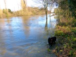 Flooded Towpath opposite Desborough Island