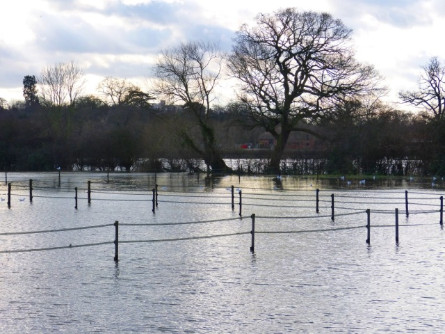 Submerged fields