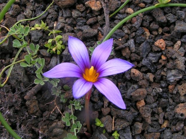 Flower in Lanzarotte