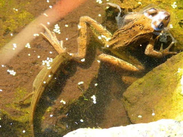 Newt & Frog