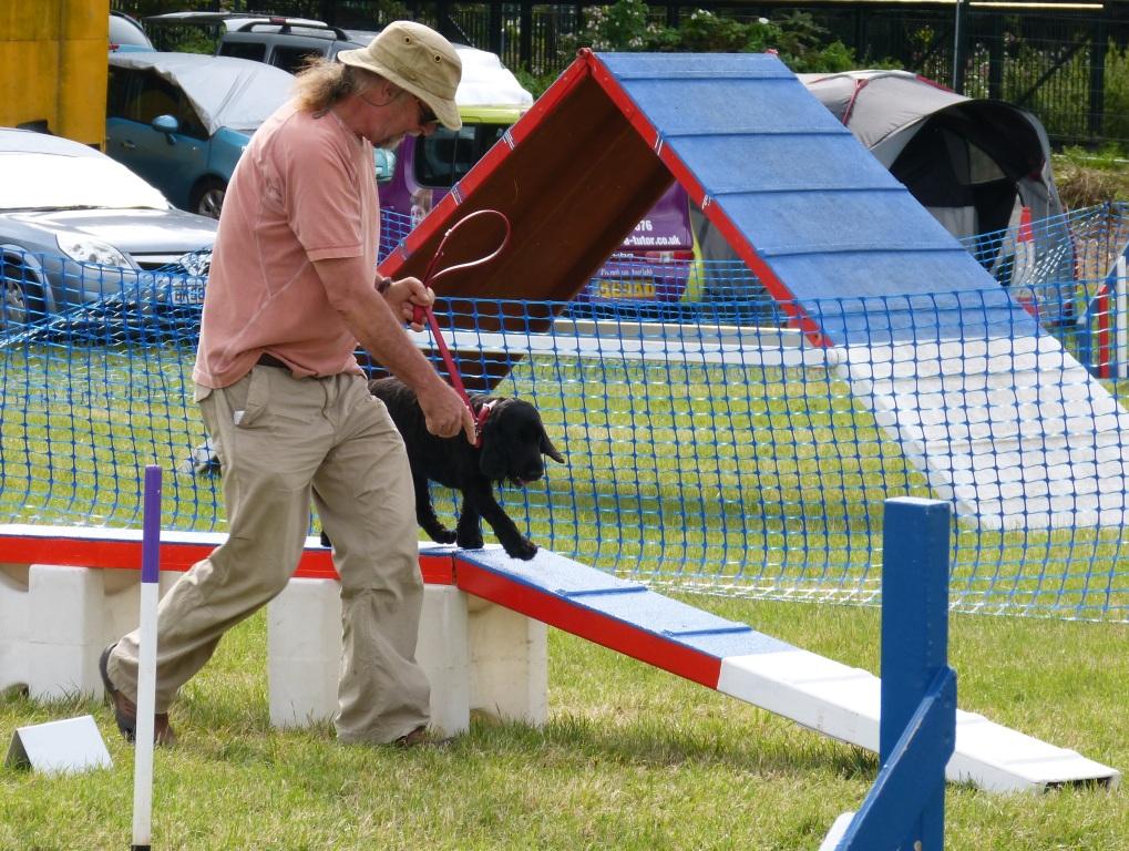Chertsey Show Dog Agility
