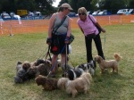 Is this the way to the dog show?
