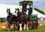 Beautiful horses & carriages